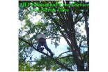 ALL PROFESSIONAL TREE SERVICE & SHRUB CARE logo