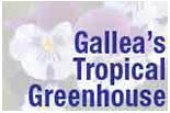 Gallea's Tropical Greenhouse logo