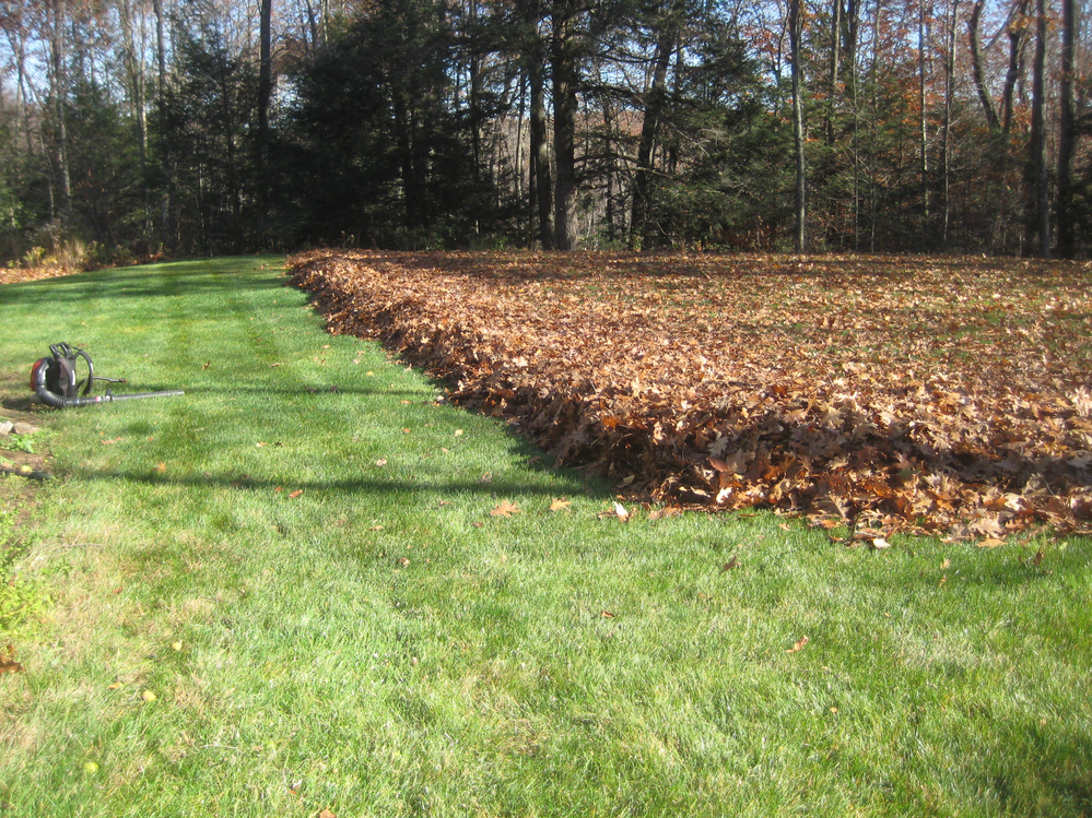 leaf removal; mowing masters of northern virginia