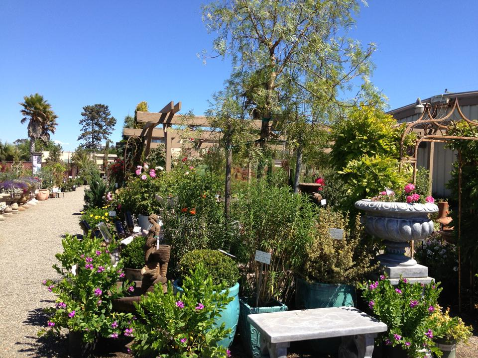 trees, bushes, shrubbery. all variety available. garden planters . bird fountains. accessories