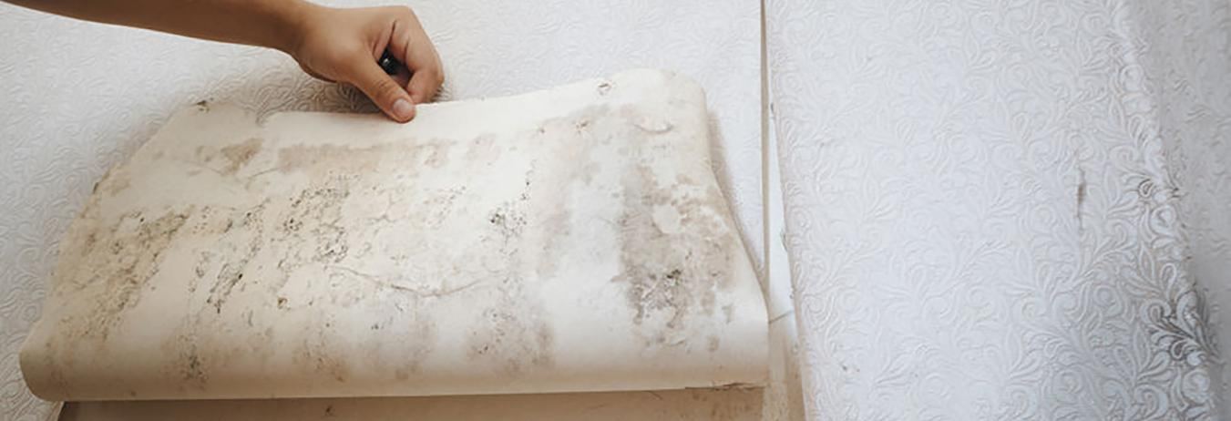 Excess Moisture Can Cause Hidden Mold In Your Home!