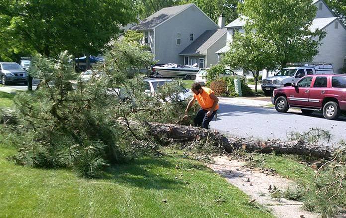 SMART TREE SERVICE LLC