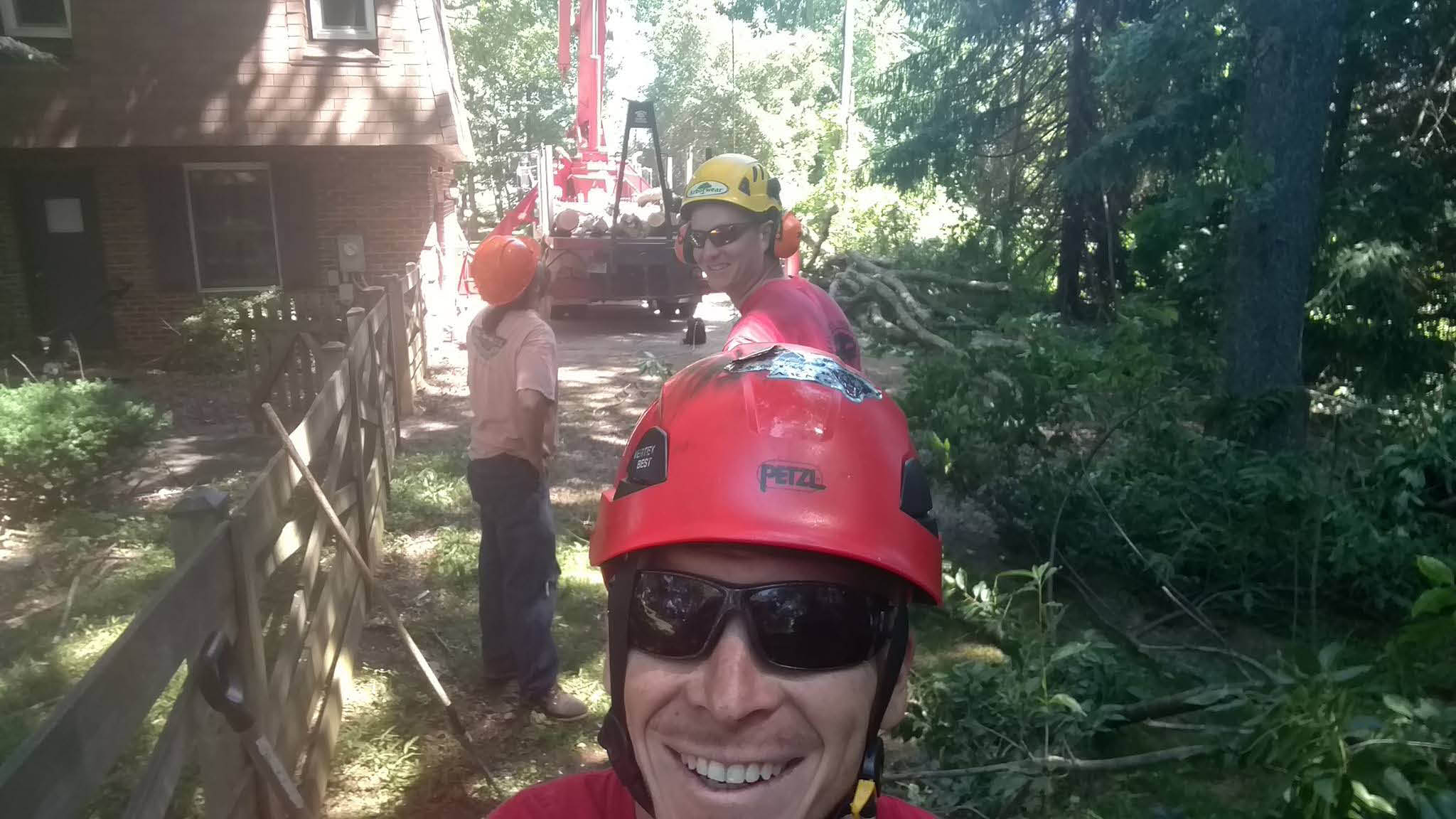tree, stump, removal, pruning, drone, rescue, evaluation, property, logging, service
