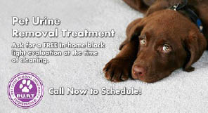pet odor removal; cardinal chem dry services manassas, va and surrounding areas