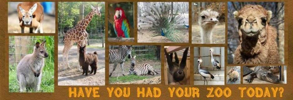 indian creek zoo lambertiville michigan bedford michigan family friendly fun