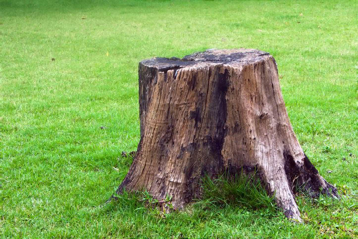 stump removal services; benfield tree service in maryland