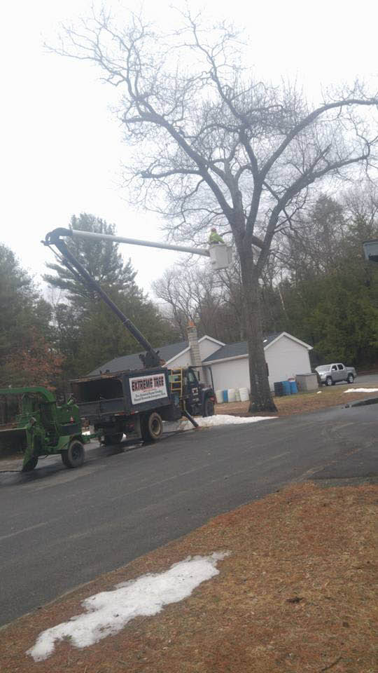 Extreme tree performs crane work in Southwick, MA