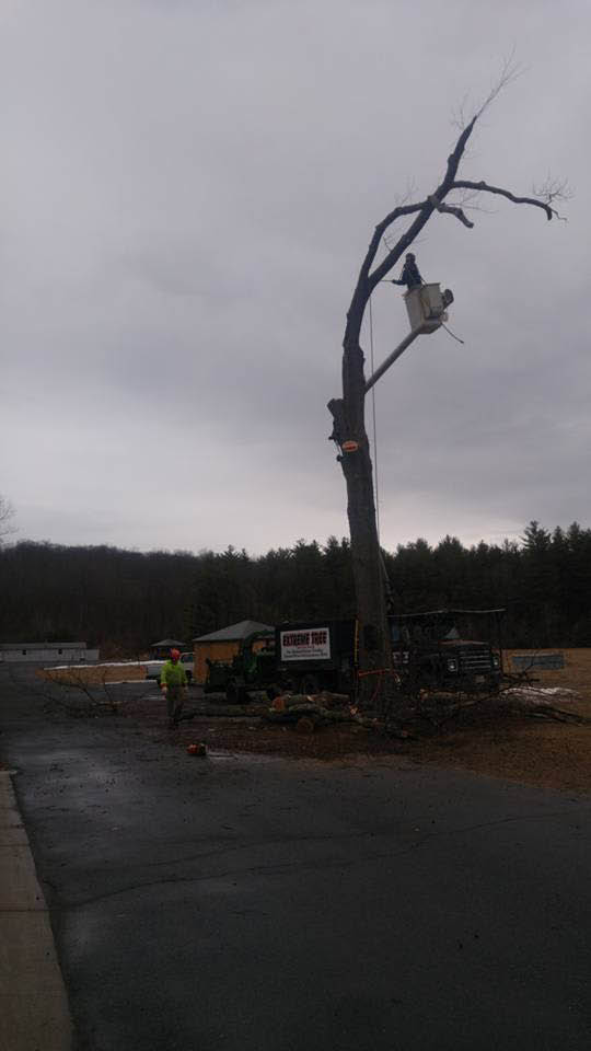 Dead tree removal services from Extreme Tree