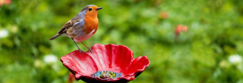 Professional Bird Hobbyists-Bird Feeders-Bird Seed-Bird Baths
