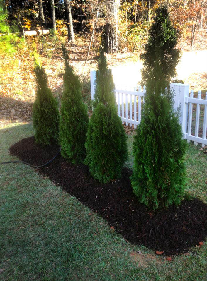 Fire Fighter Lawn Maintenance in Newnan near Willow Creek, Peachtree City, Palmetto, Georgia