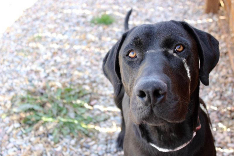 Luke, an adoptable dog, is waiting at the Cache Humane Society  Logan, Utah, for his forever family.