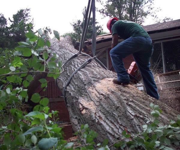Emergency Tree Service  Tree Removal  Tree Pruning  Stump Removal  Tree Care & Fertilization Mulch Supply  Crane Rental  Snow Plowing  Landscaping & Planting