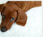 Our carpet cleaning can remove pet stains from your carpet.