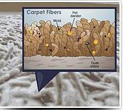 Carpet cleaning can remove dirt and allergens from carpet and upholstery.