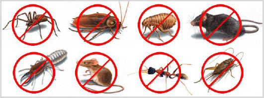termites, pests, rodents, Ticks