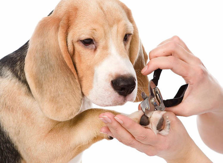 grooming, nail clipping, pet, spa, clean