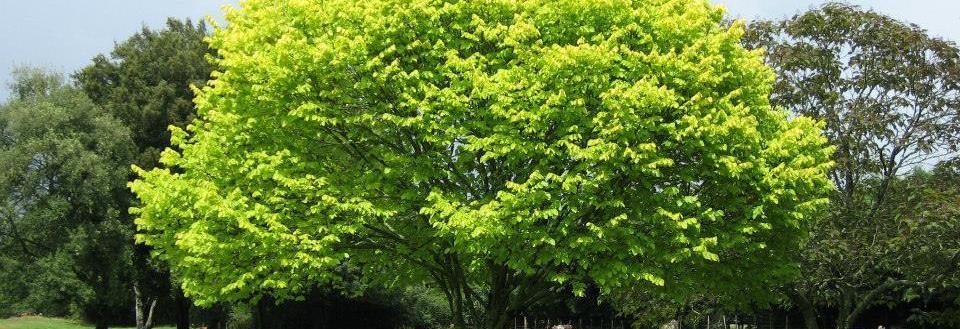 Whack 'Em & Stack 'Em Tree Services in Hanahan, SC banner