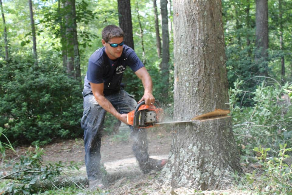 Tree service near Summerville, SC