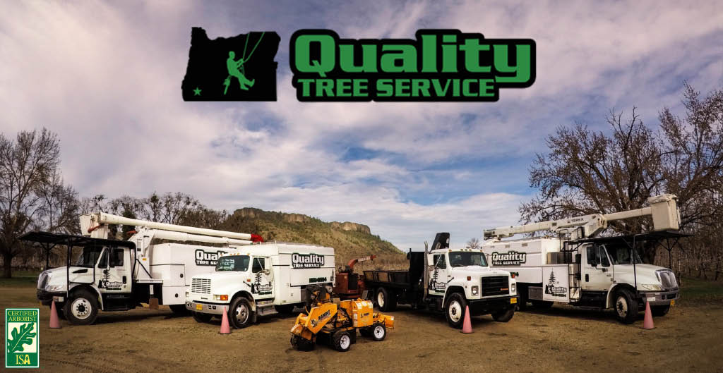 Your professional Tree Service.