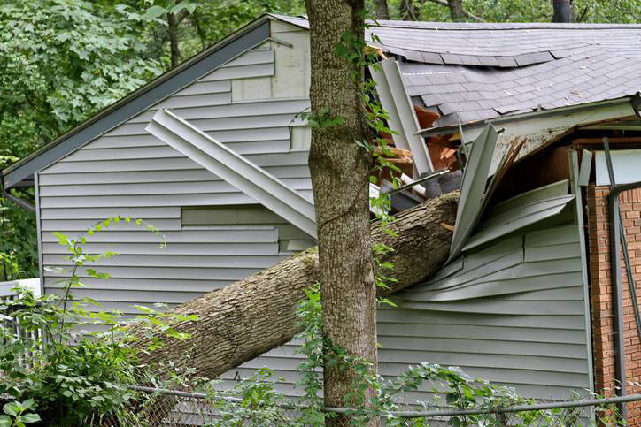 tree fallen on house; benfield tree service in maryland