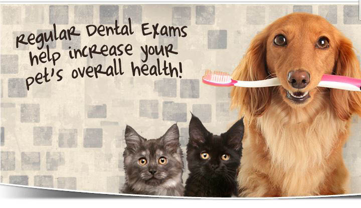 Dental-dog-exam