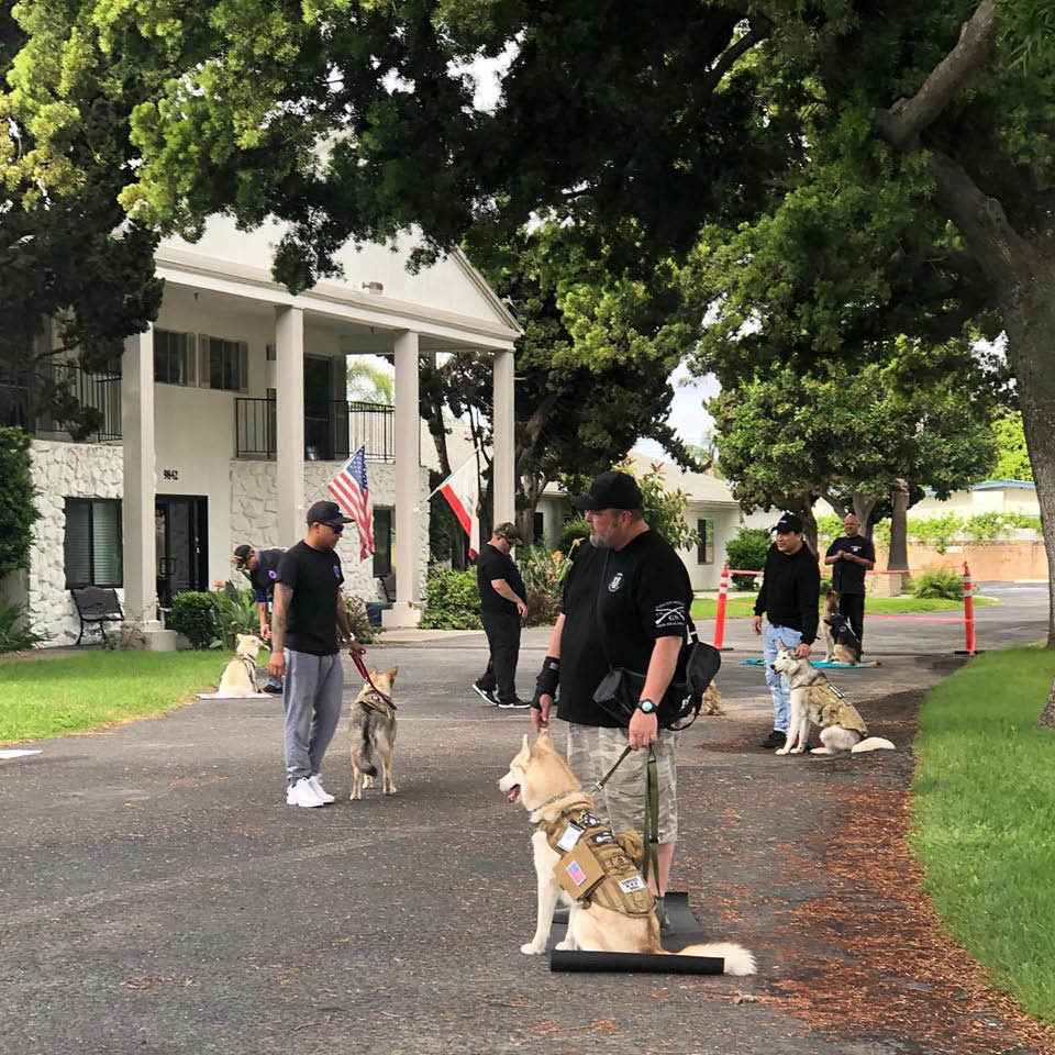 Basic obedience  Seven basic commands Correct collar and leash for dog and handler Walking on a leash correctly Proper leash corrections