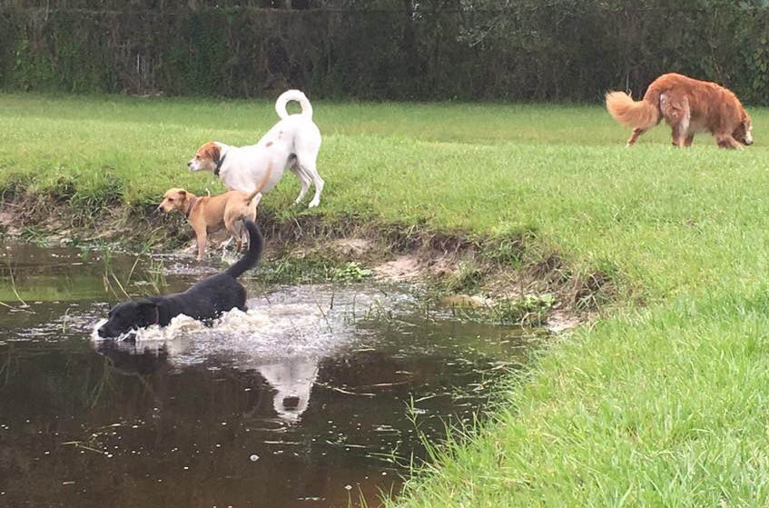 The swimming pond - an exercise in fun