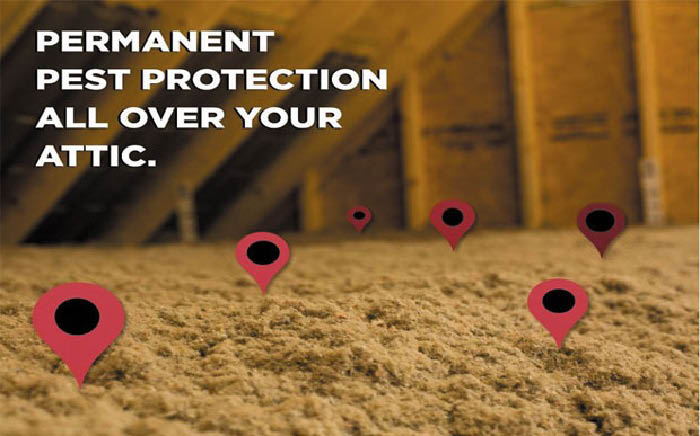 Protect your attic from termites, roach and other pests