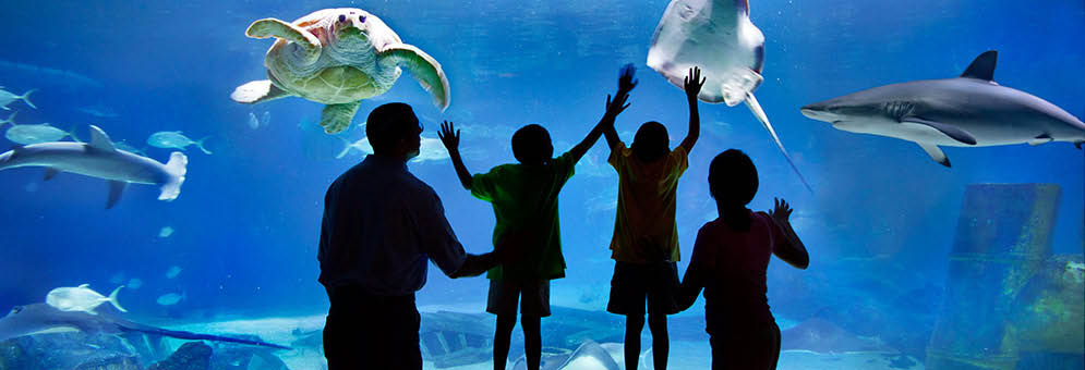 Adventure Aquarium Camden Nj 1 Coupon July 10 2017
