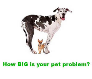 America's Best Carpet & Upholstery offers dogs pet stain removal sanitizing for Denver homeowners