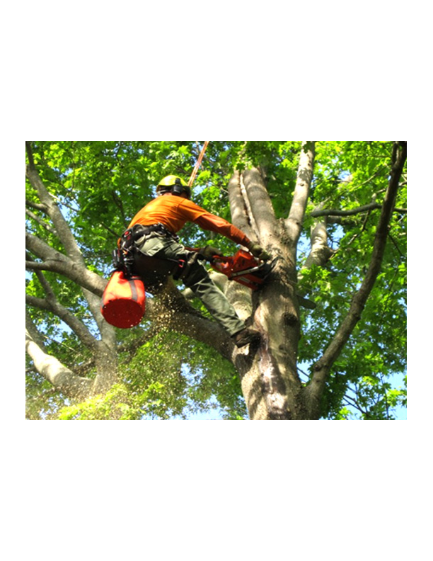 Large tree and dangerous limb removal