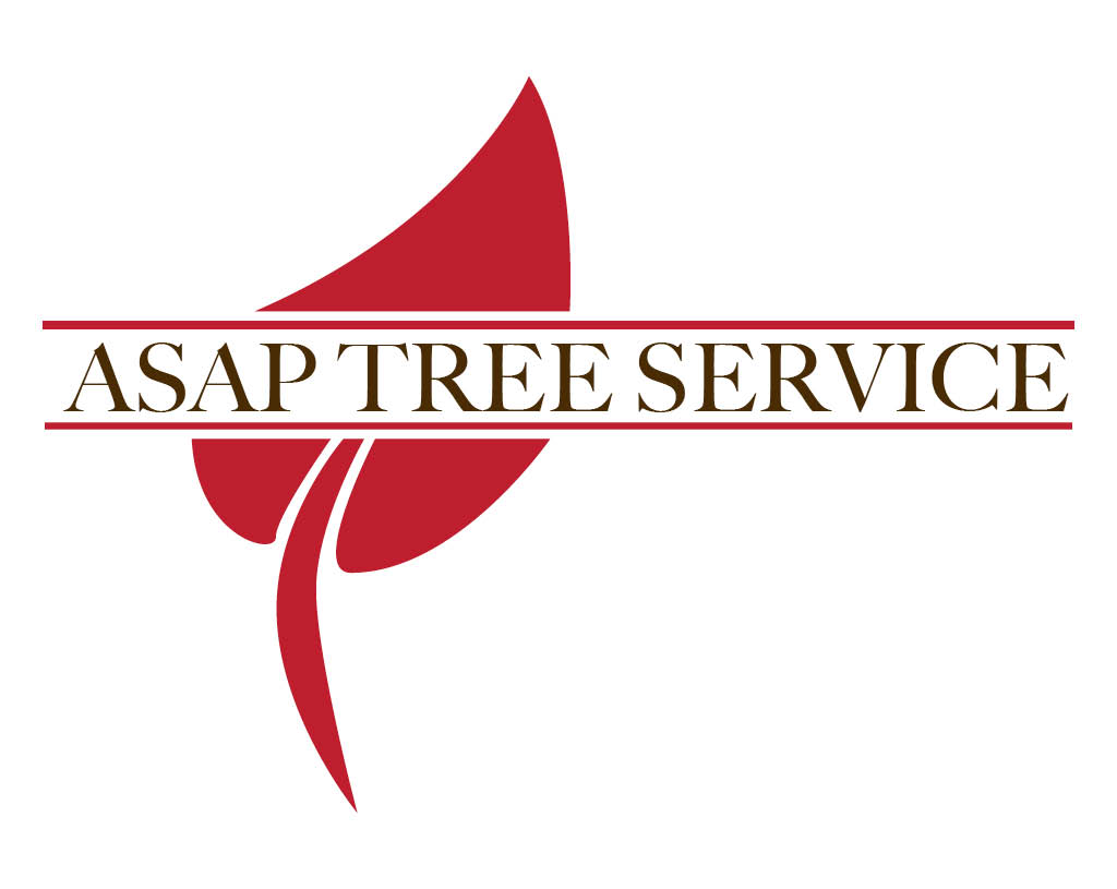 Spring lawn and landscape,ASAP Tree service, landscape, tree removal,