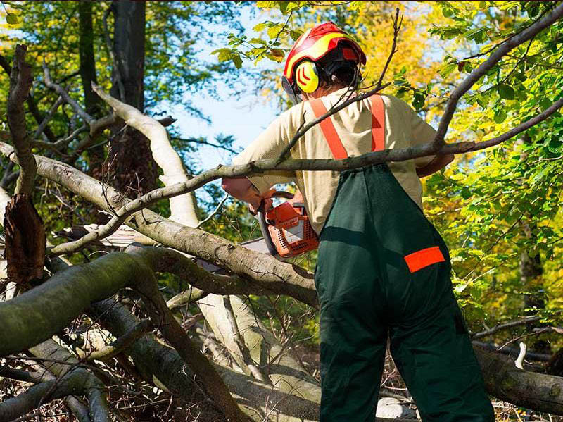 Get tree service and tree removal in Round Rock