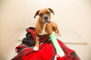 pound dogs for adoption, animal rescue home, Phoenix, AZ