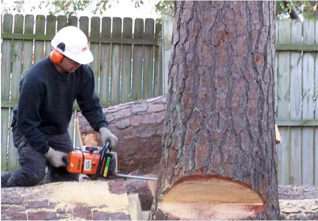 Able Tree Solutions in Randolph NJ Storm Damage Cleanup