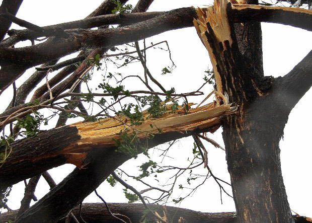 Storm damage cleanup provided by Absolute Arbor tree care professionals - storm damage removal - tree services in Kirkland, WA - tree service coupons near me