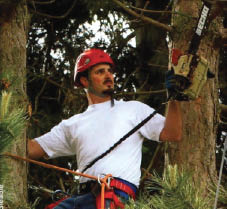 Absolute Arbor - tree care professionals - Kirkland tree services - tree services in Kirkland, WA - tree service coupons near me