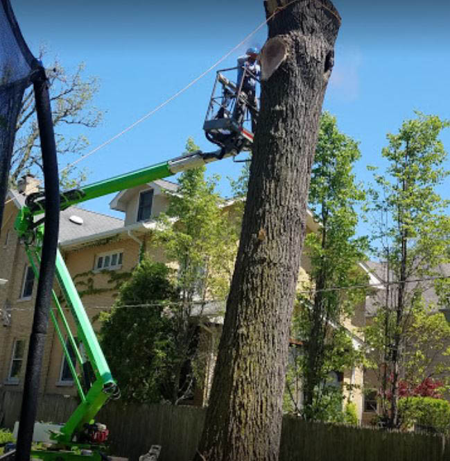 Alejandre's Tree Service is fully insured and is committed to assisting every client's tree needs. We serve Lake, Cook, and McHenry counties. ​
