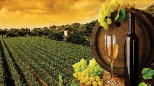 Limousine service to wine tours in Northern California