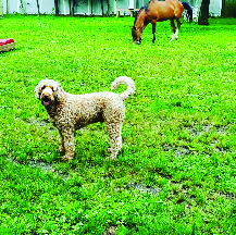 Dog playing with horses and other animals