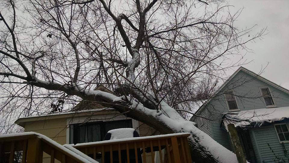allied tree storm damage fallen tree