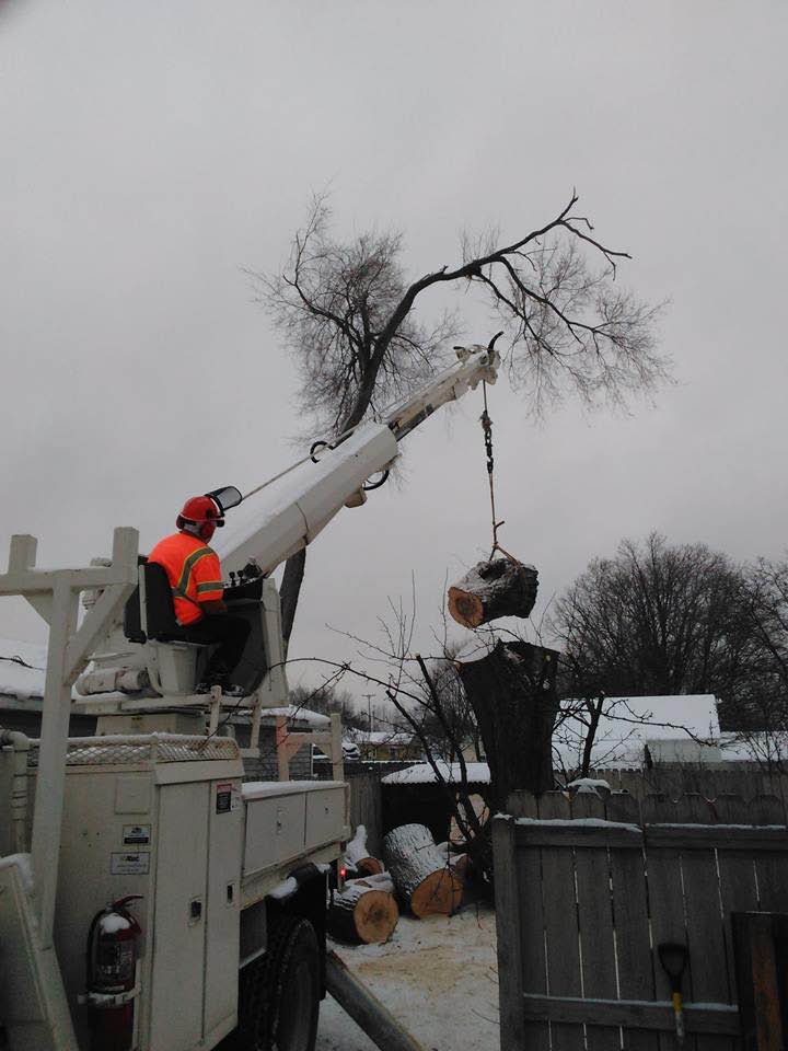 allied tree service lift