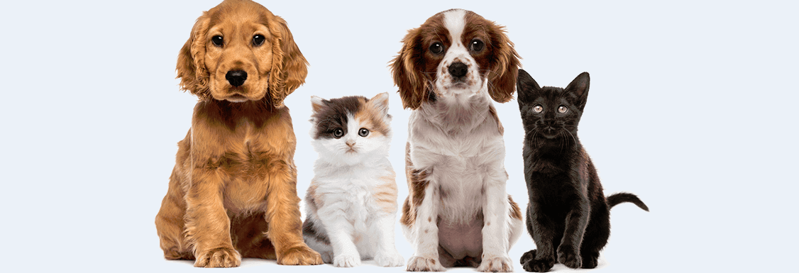Animal Hospital of Maple Valley, WA banner image