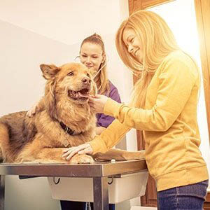 Quality veterinarian care for dogs at Animal Hospital of Maple Valley in Maple Valley, WA - veterinarian coupons - veterinarians near me - vets near me - veterinary clinics near me