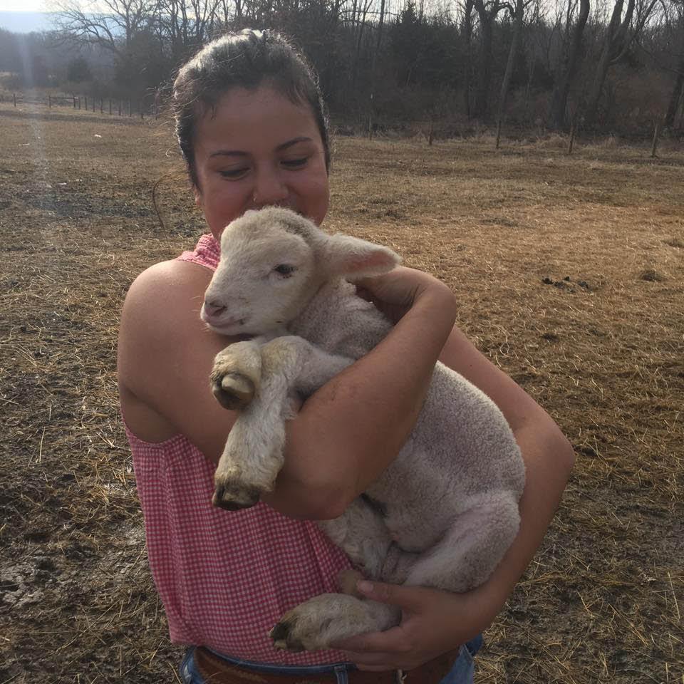 Appalachian Sheep from Appalachian Animal Experience in Vernon NJ