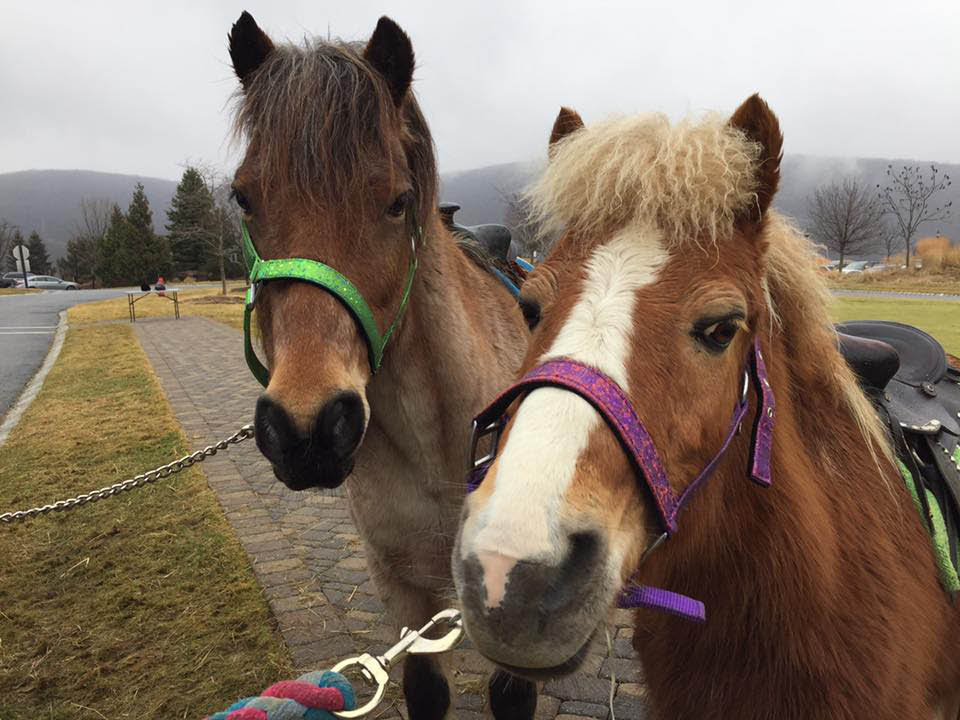 Pony rides provided by Appalachian Animal Experience in Vernon NJ
