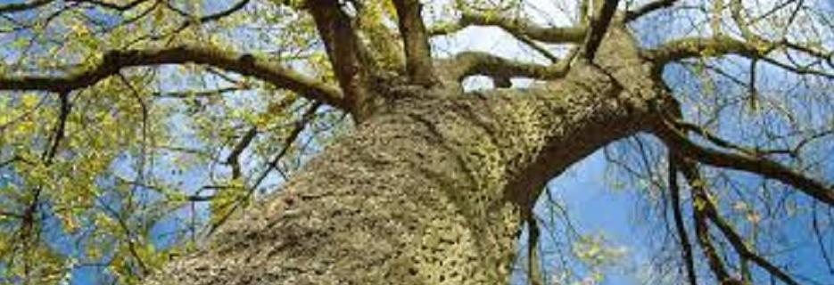 photo of tree trimmed by Arbor Tree Service