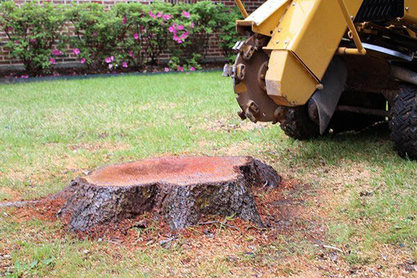 Arbortec Tree Solutions - stump grinding near me - tree services near me - tree removal companies near me - remove my trees - tree service coupons near me