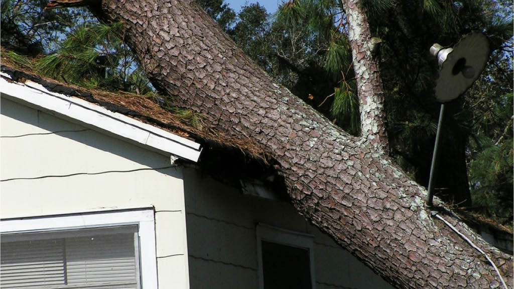 Are your trees safe? - Arbortec Tree Solutions removes fallen trees - storm damage - tree damage - tree removal near me - tree services near me - tree removal coupons near me