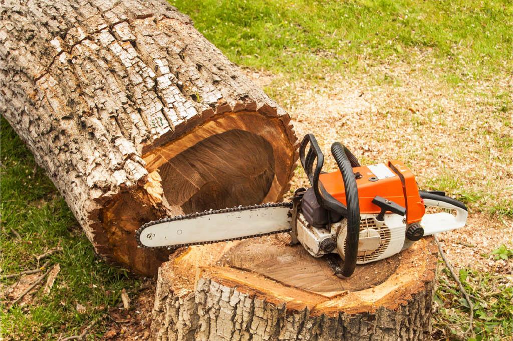 Arbortec Tree Solutions - Tumwater, Washington - tree service companies near me - tree removal near me - tree services near me - remove my tree - tree service coupons near me